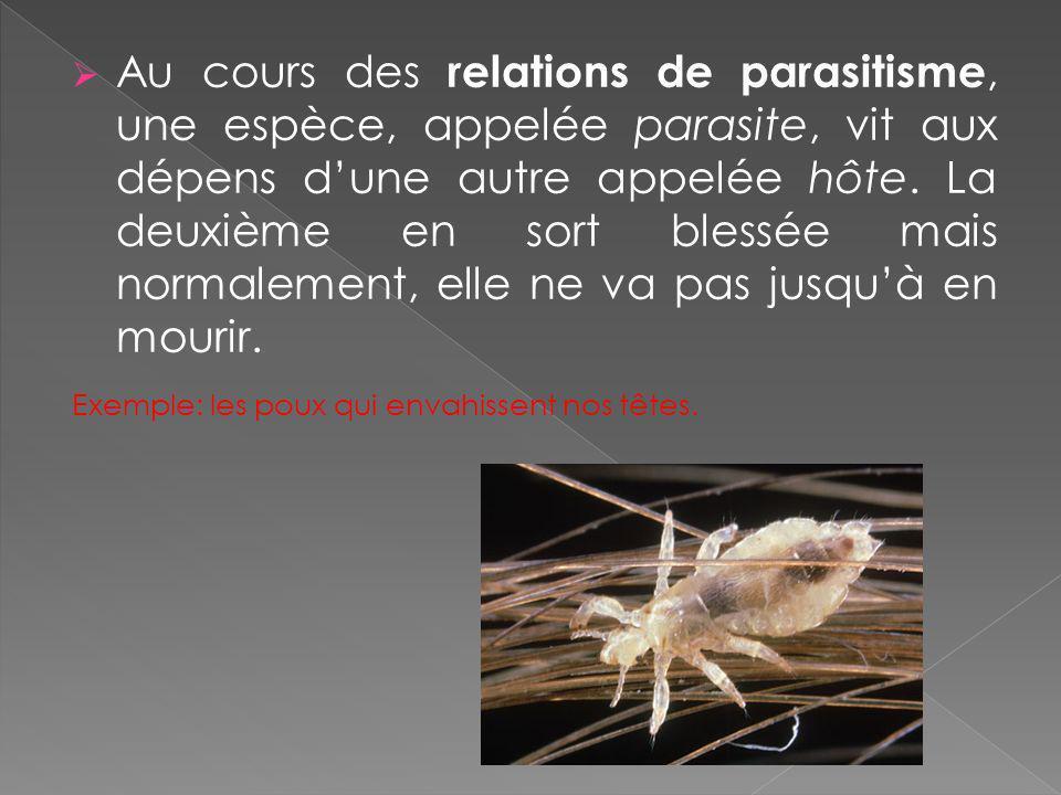 Au cours des relations de parasitisme, une espèce, appelée parasite, vit aux dépens d'une autre appelée hôte. La deuxième en sort blessée mais normalement, elle ne va pas jusqu'à en mourir.