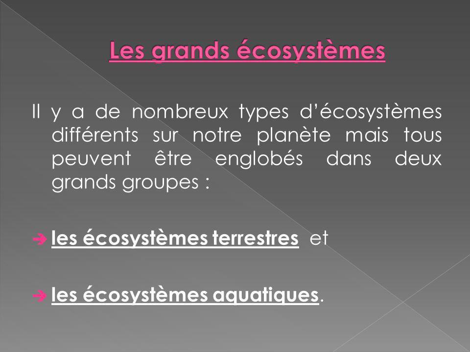 Les grands écosystèmes
