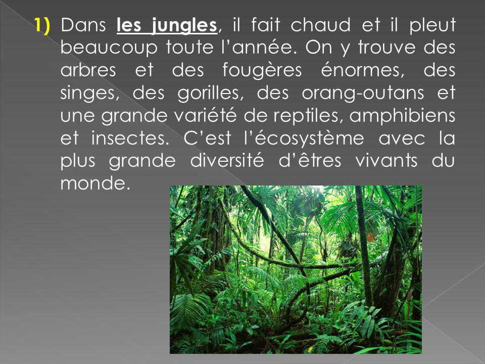 1) Dans les jungles, il fait chaud et il pleut beaucoup toute l'année