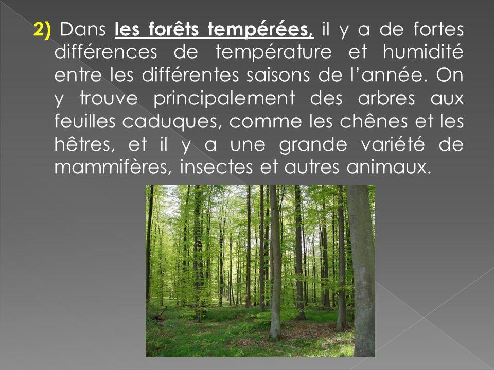 2) Dans les forêts tempérées, il y a de fortes différences de température et humidité entre les différentes saisons de l'année.