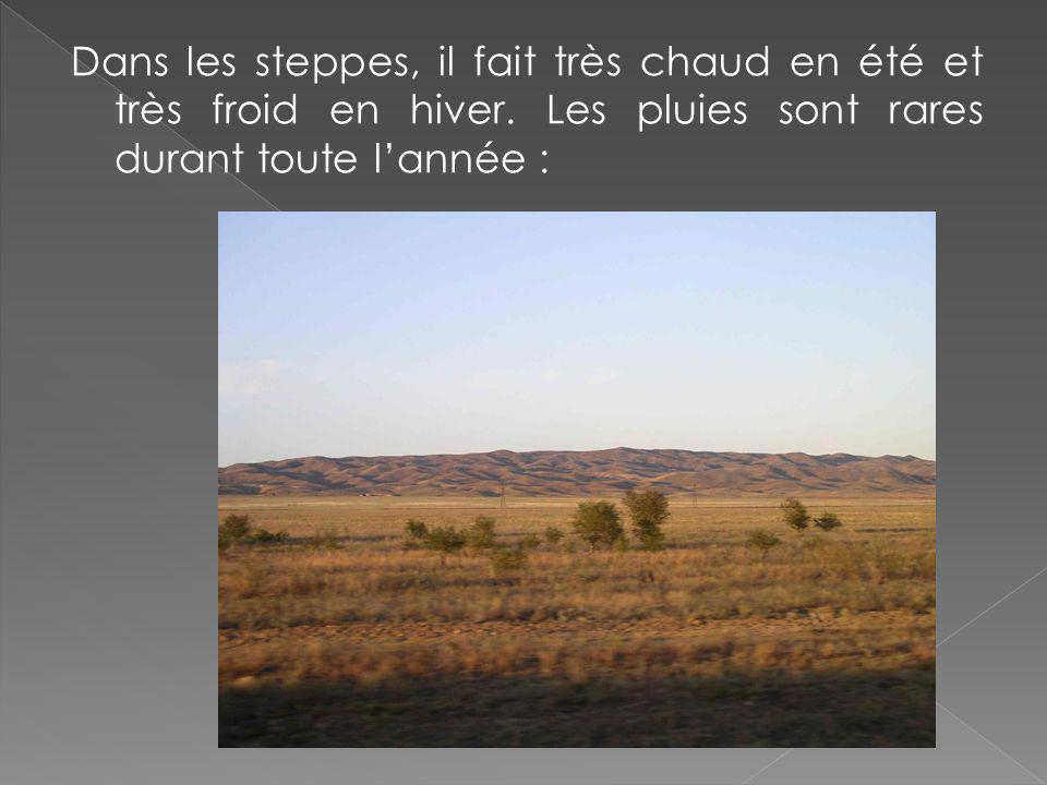 Dans les steppes, il fait très chaud en été et très froid en hiver