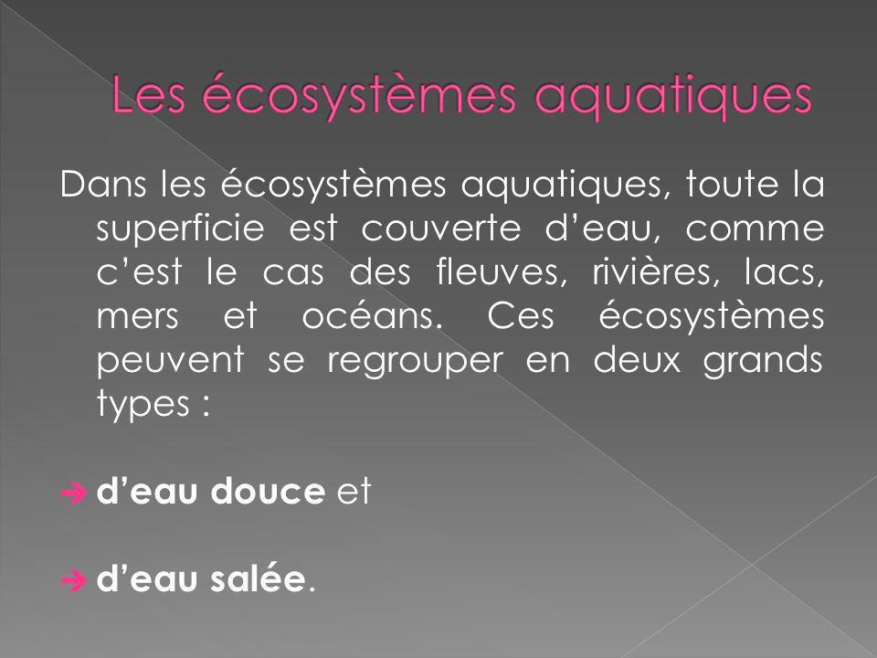 Les écosystèmes aquatiques