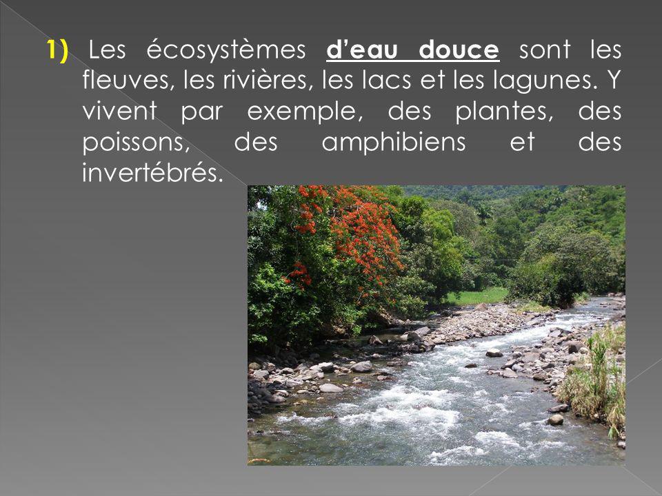 1) Les écosystèmes d'eau douce sont les fleuves, les rivières, les lacs et les lagunes.