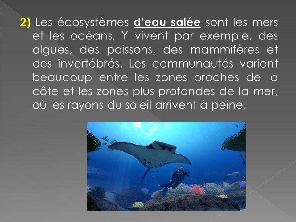 2) Les écosystèmes d'eau salée sont les mers et les océans