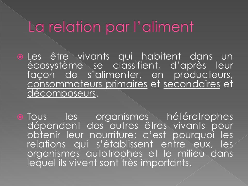 La relation par l'aliment