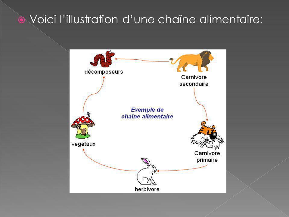 Voici l'illustration d'une chaîne alimentaire: