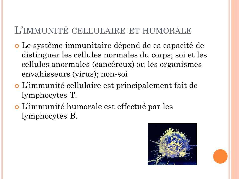 L'immunité cellulaire et humorale