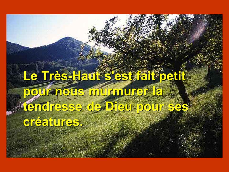 Le Très-Haut s est fait petit pour nous murmurer la tendresse de Dieu pour ses créatures.