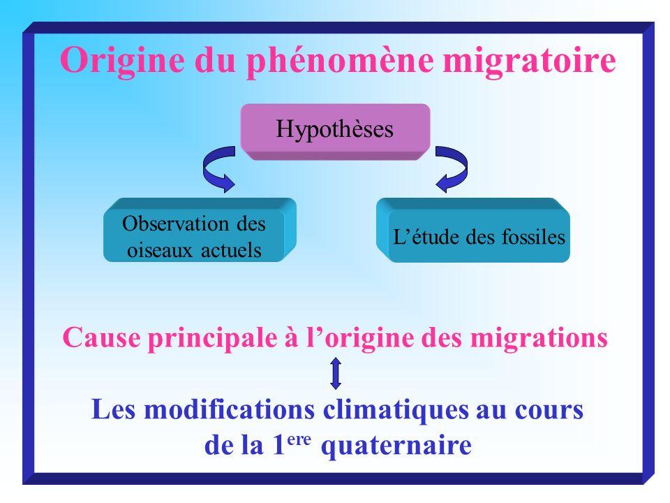 Origine du phénomène migratoire
