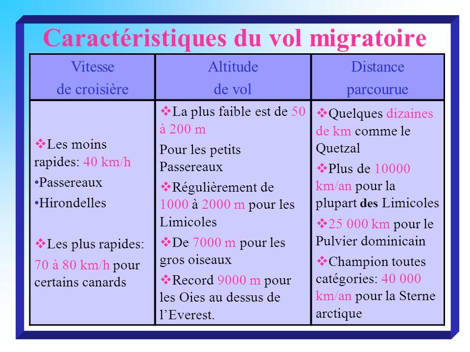 Caractéristiques du vol migratoire