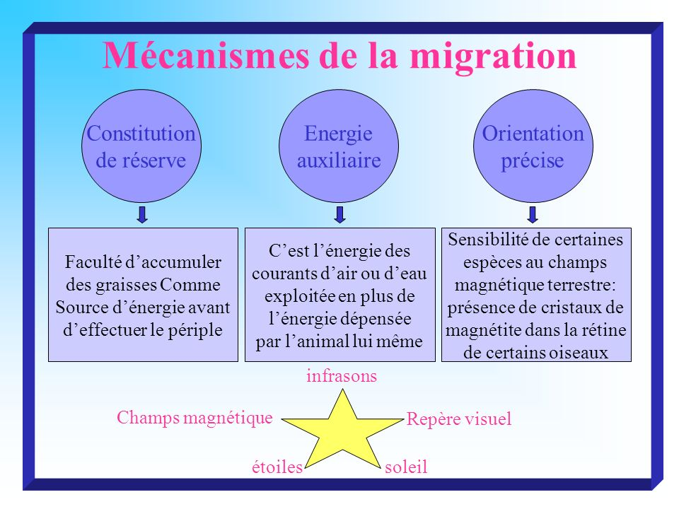 Mécanismes de la migration