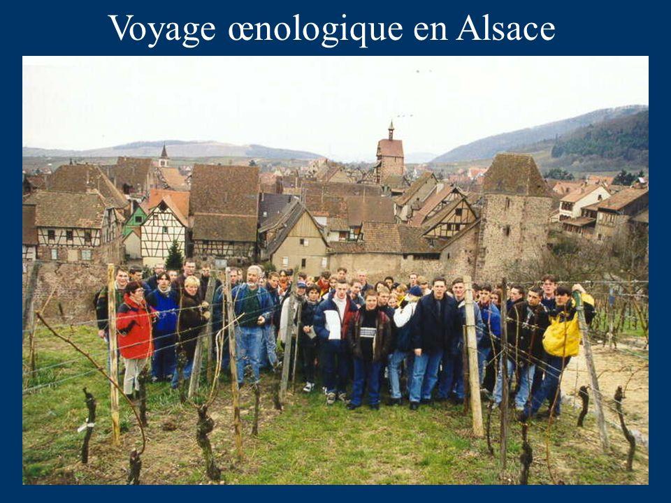 Voyage œnologique en Alsace