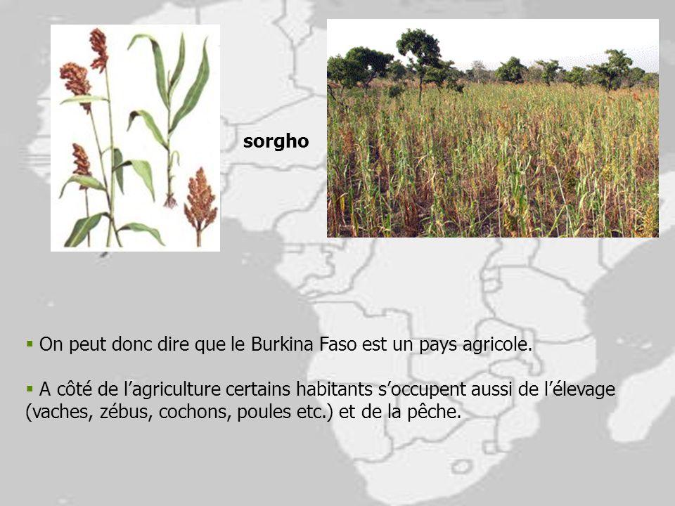 sorgho On peut donc dire que le Burkina Faso est un pays agricole.