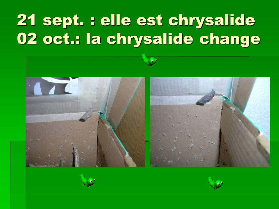 21 sept. : elle est chrysalide 02 oct.: la chrysalide change