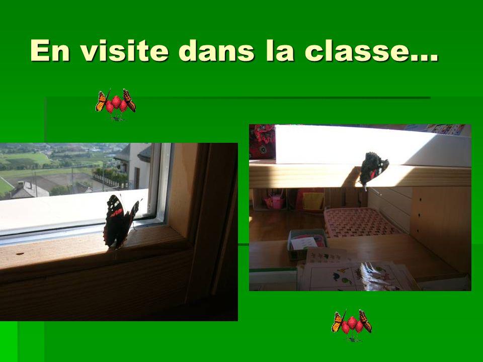En visite dans la classe…