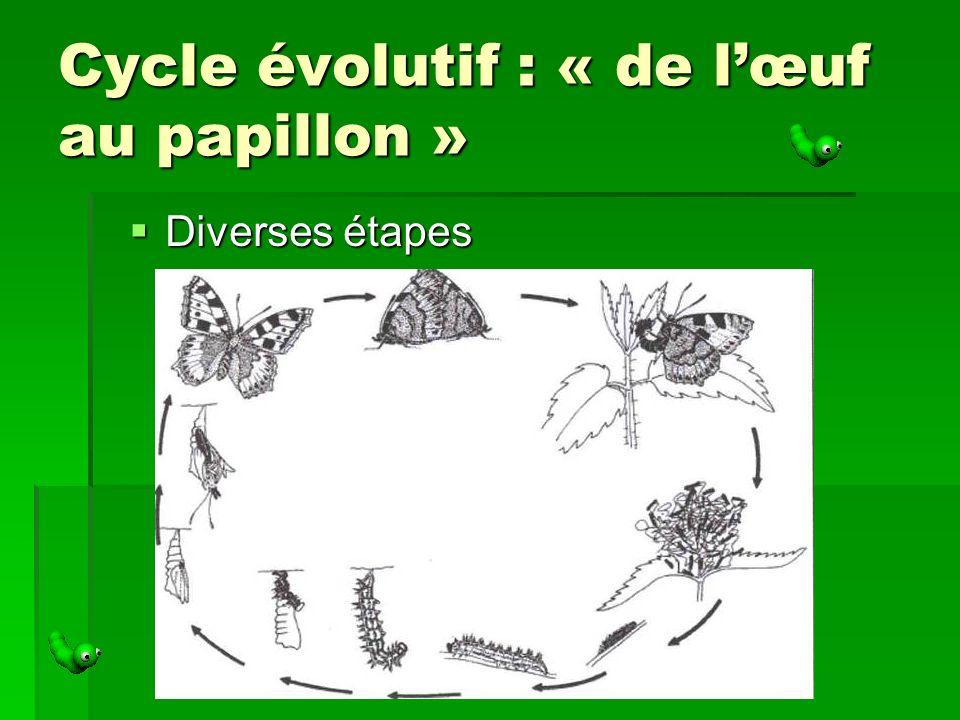 Cycle évolutif : « de l'œuf au papillon »