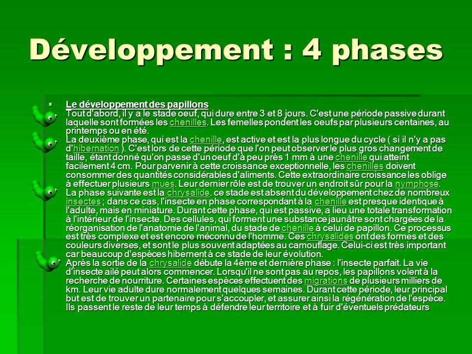 Développement : 4 phases