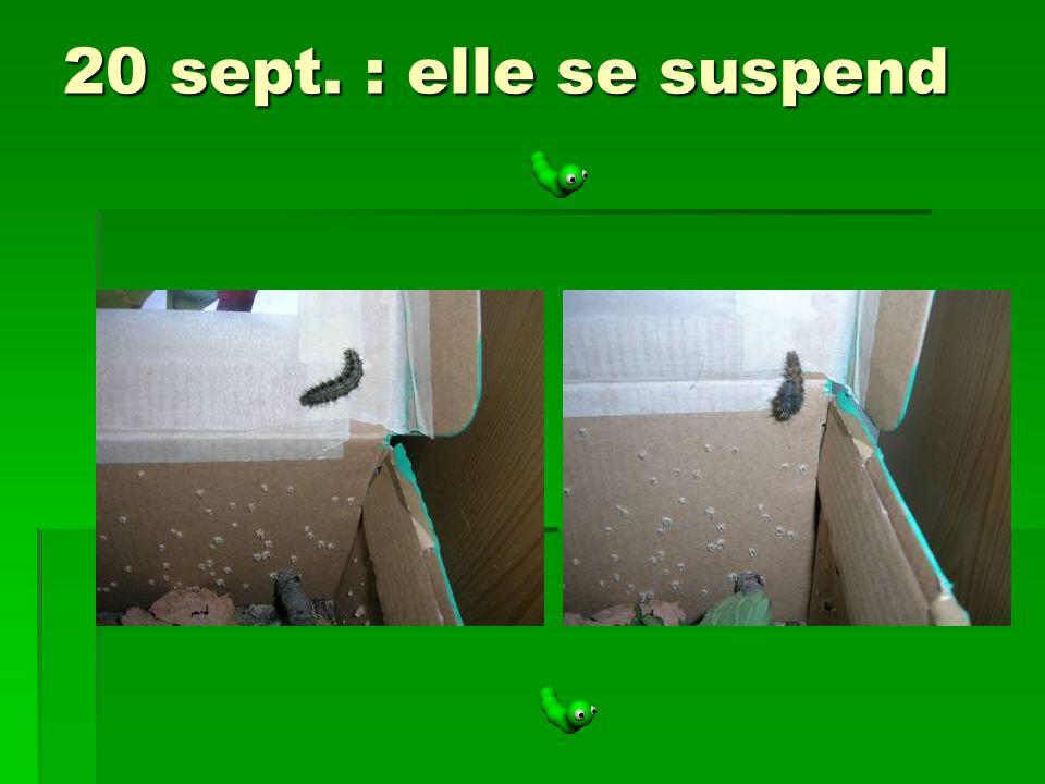 20 sept. : elle se suspend