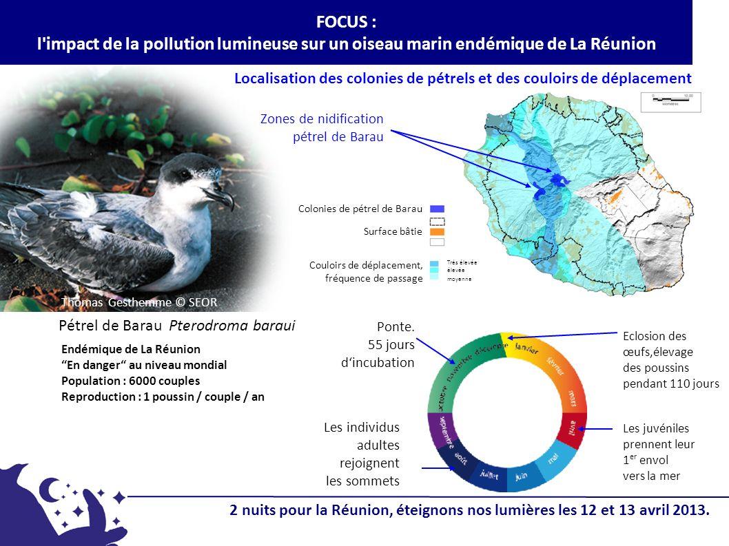 FOCUS : l impact de la pollution lumineuse sur un oiseau marin endémique de La Réunion