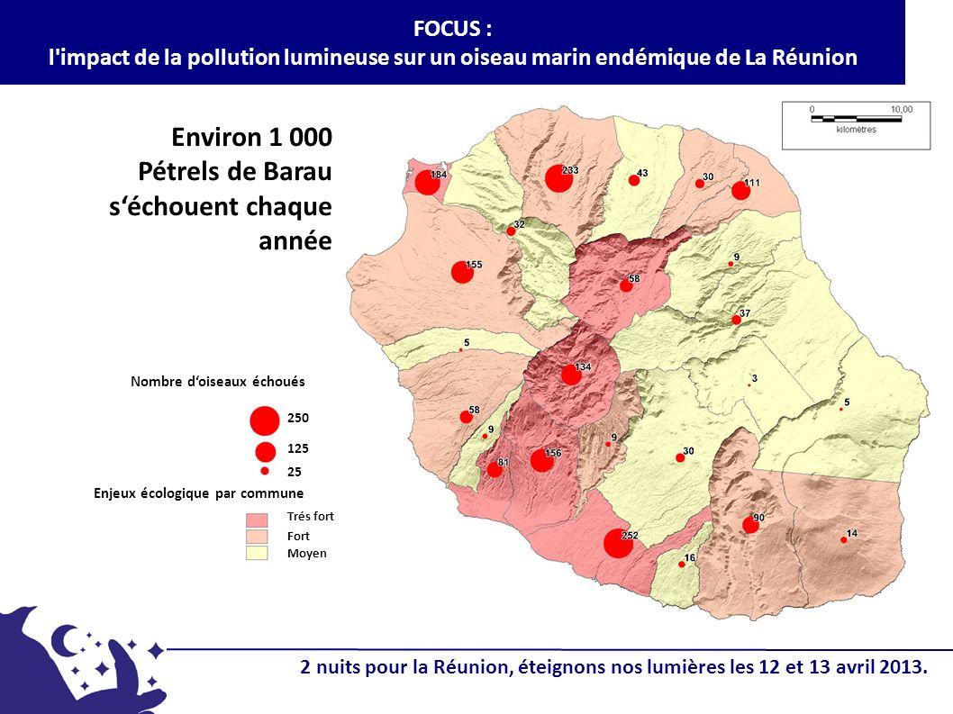 Environ 1 000 Pétrels de Barau s'échouent chaque année