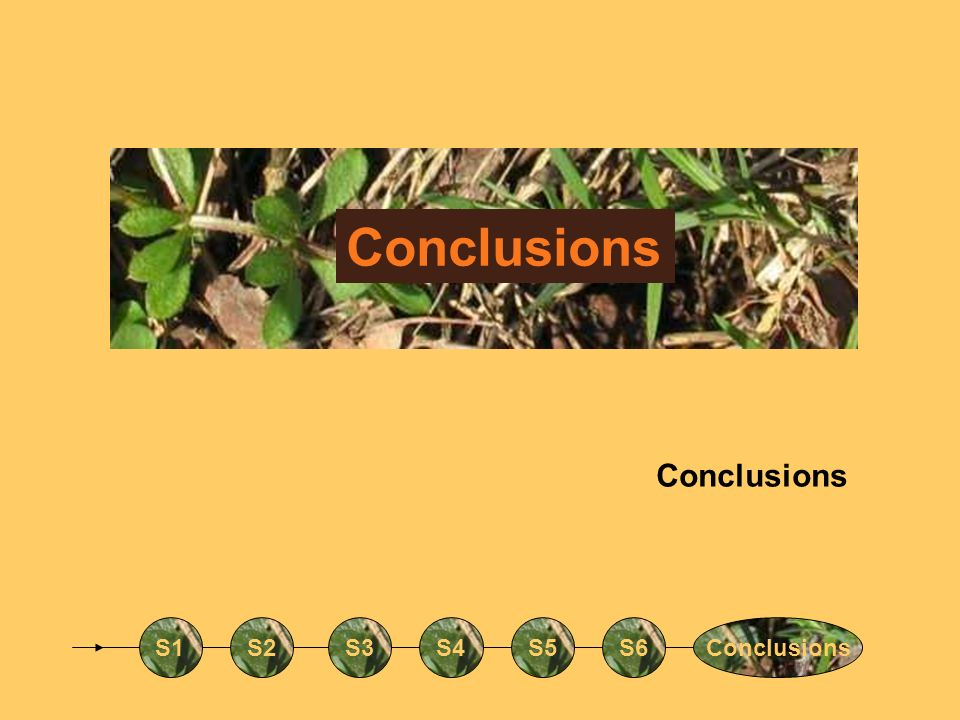 Conclusions Conclusions S1 S2 S3 S4 S5 S6 Conclusions