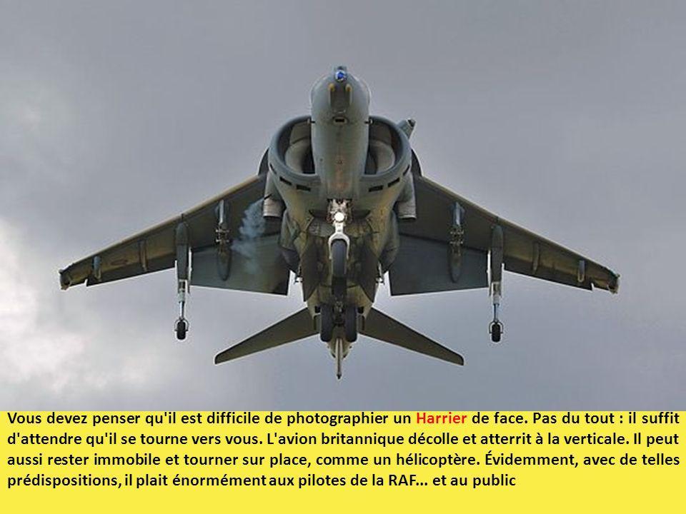 Vous devez penser qu il est difficile de photographier un Harrier de face.