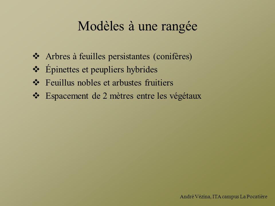 Modèles à une rangée Arbres à feuilles persistantes (conifères)