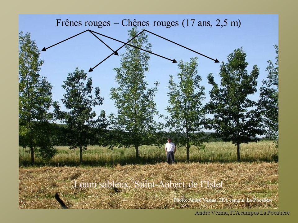 Frênes rouges – Chênes rouges (17 ans, 2,5 m)