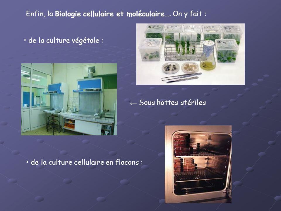 Enfin, la Biologie cellulaire et moléculaire…. On y fait :
