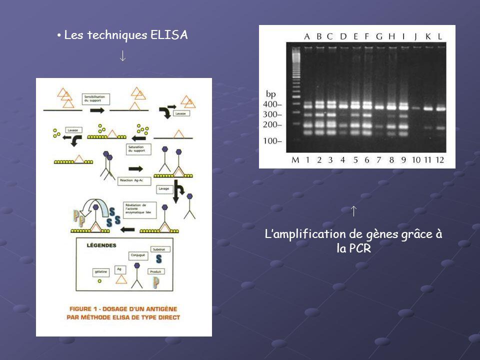 L'amplification de gènes grâce à la PCR