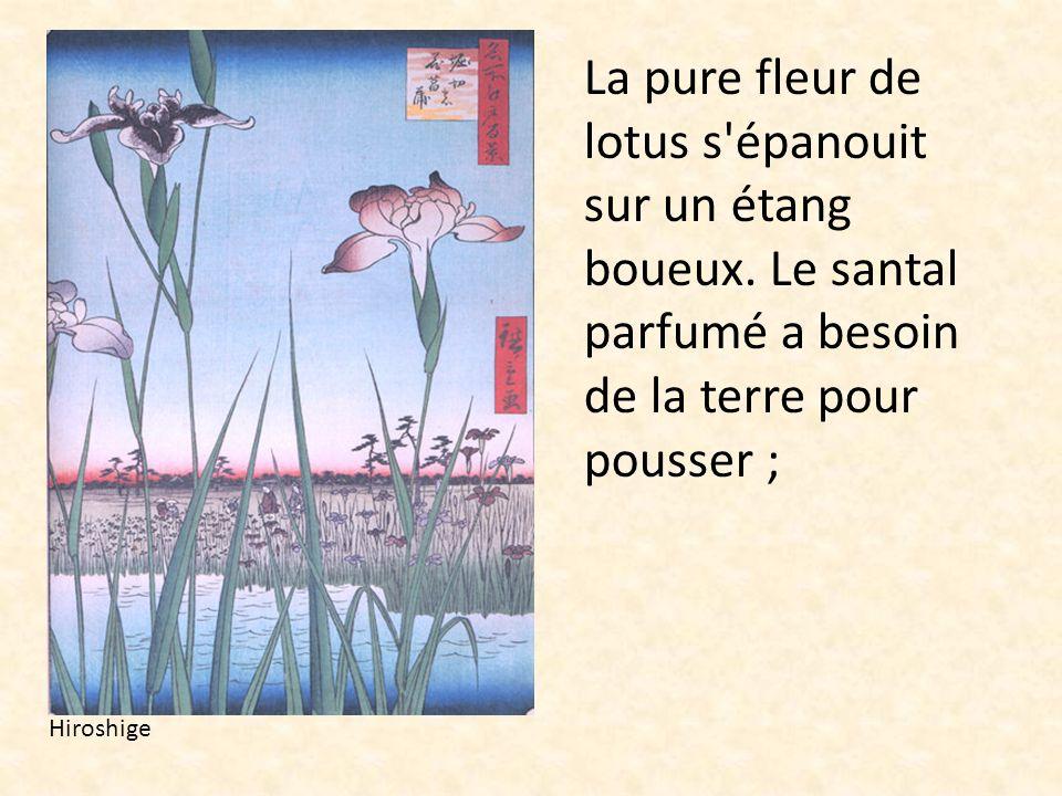 La pure fleur de lotus s épanouit sur un étang boueux