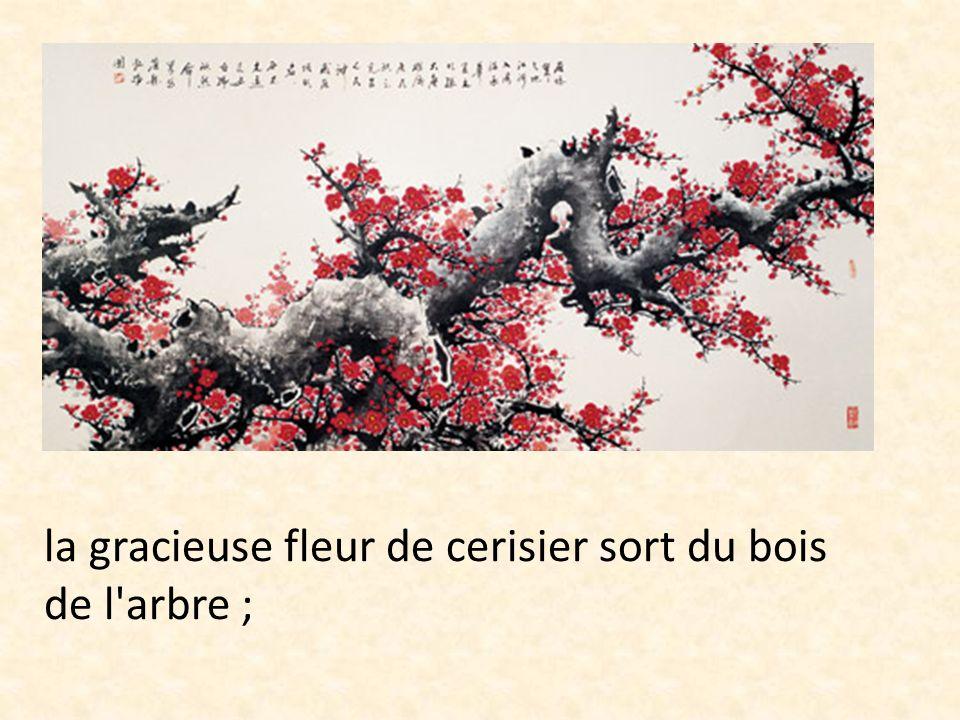 la gracieuse fleur de cerisier sort du bois de l arbre ;