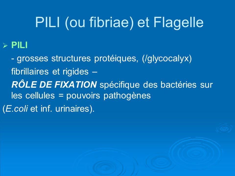 PILI (ou fibriae) et Flagelle