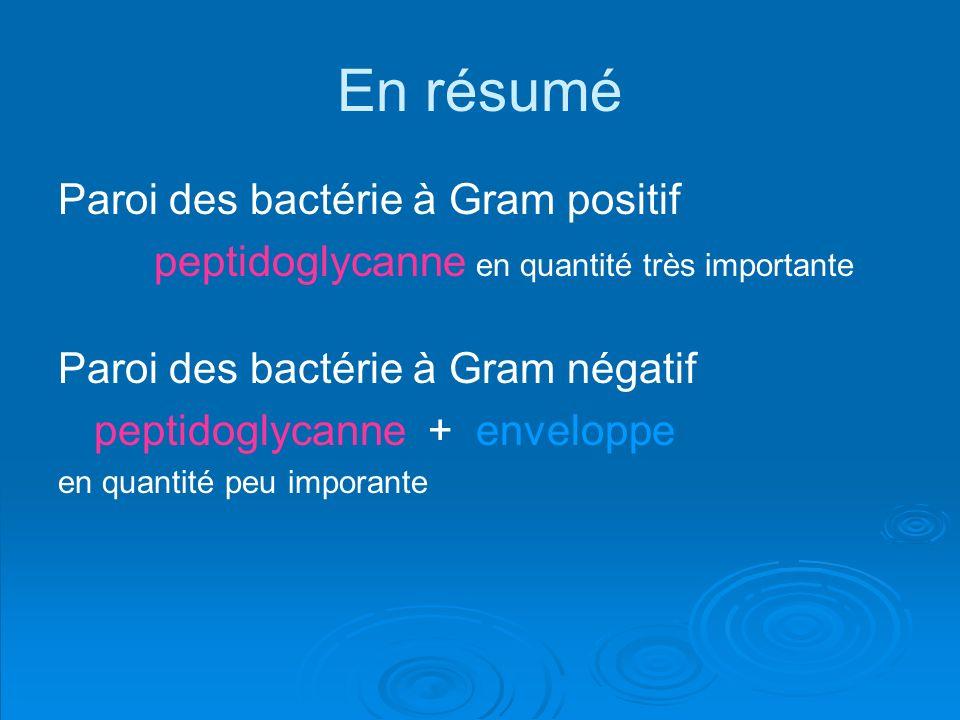 En résumé Paroi des bactérie à Gram positif