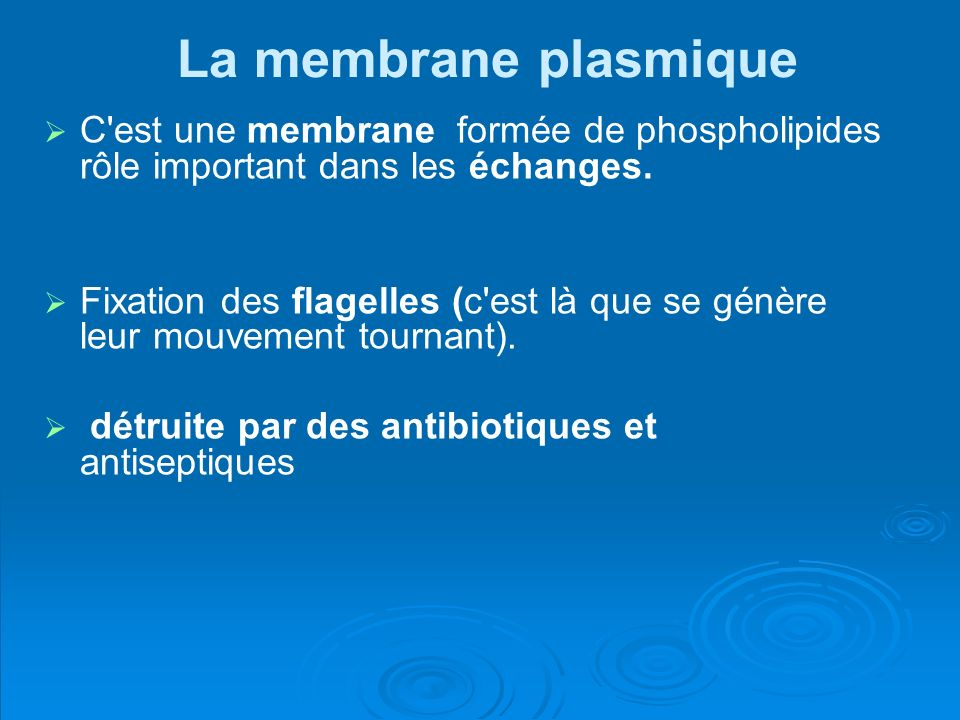 La membrane plasmique C est une membrane formée de phospholipides rôle important dans les échanges.