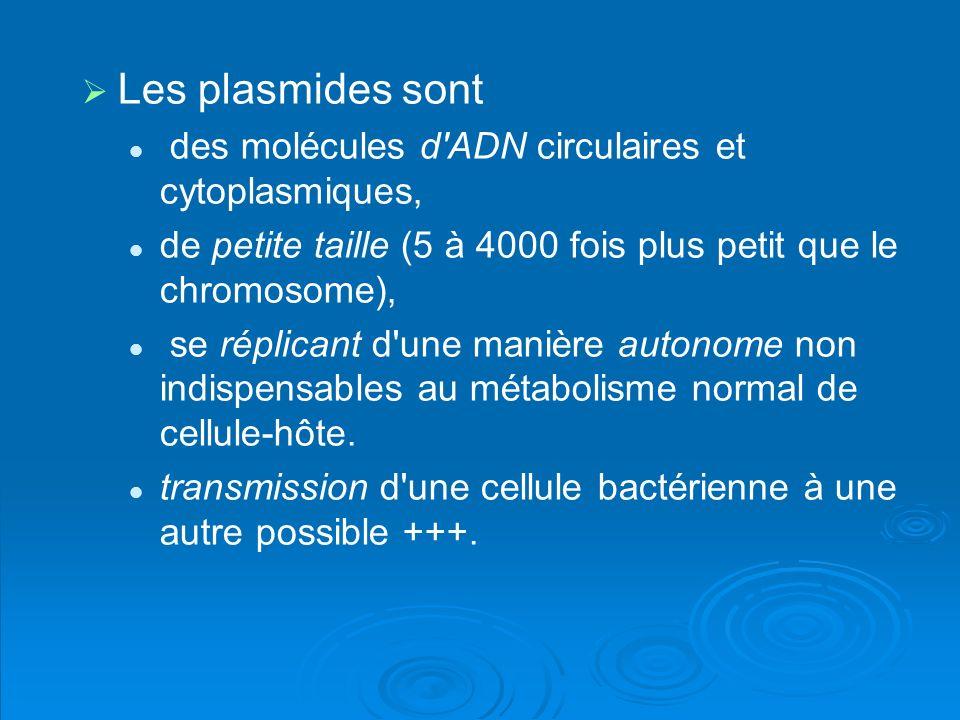 Les plasmides sont des molécules d ADN circulaires et cytoplasmiques,
