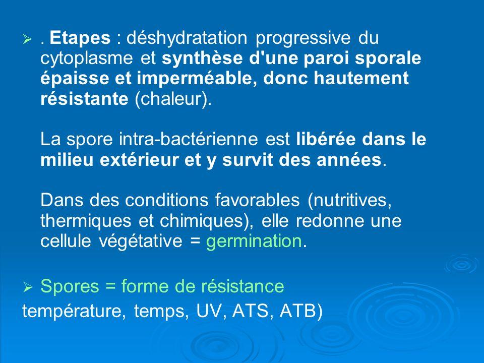 Spores = forme de résistance température, temps, UV, ATS, ATB)