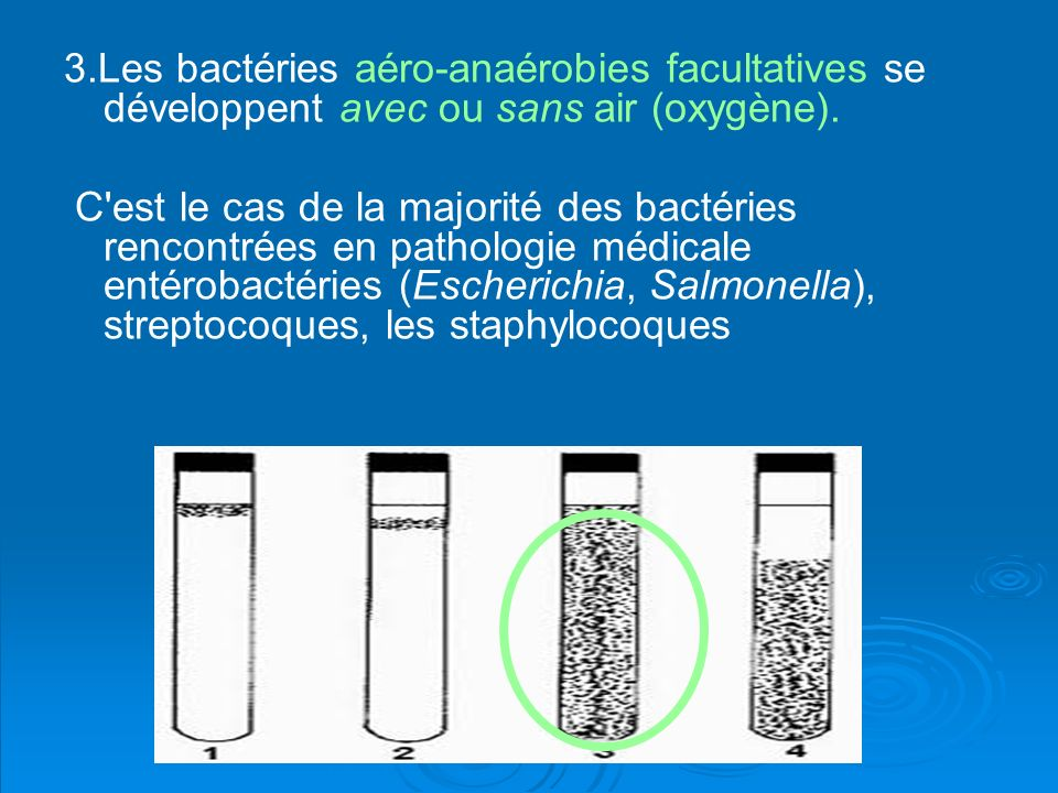 3.Les bactéries aéro-anaérobies facultatives se développent avec ou sans air (oxygène).