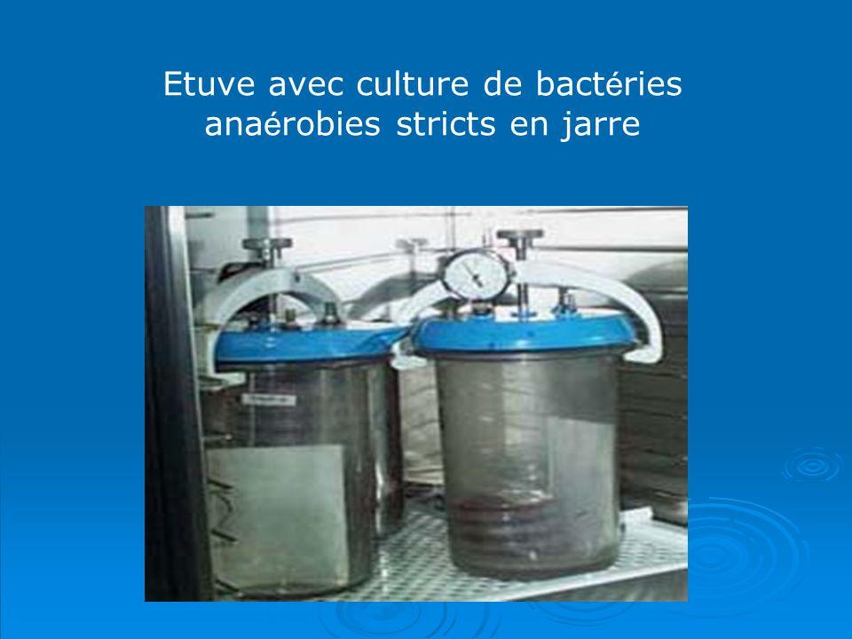 Etuve avec culture de bactéries anaérobies stricts en jarre