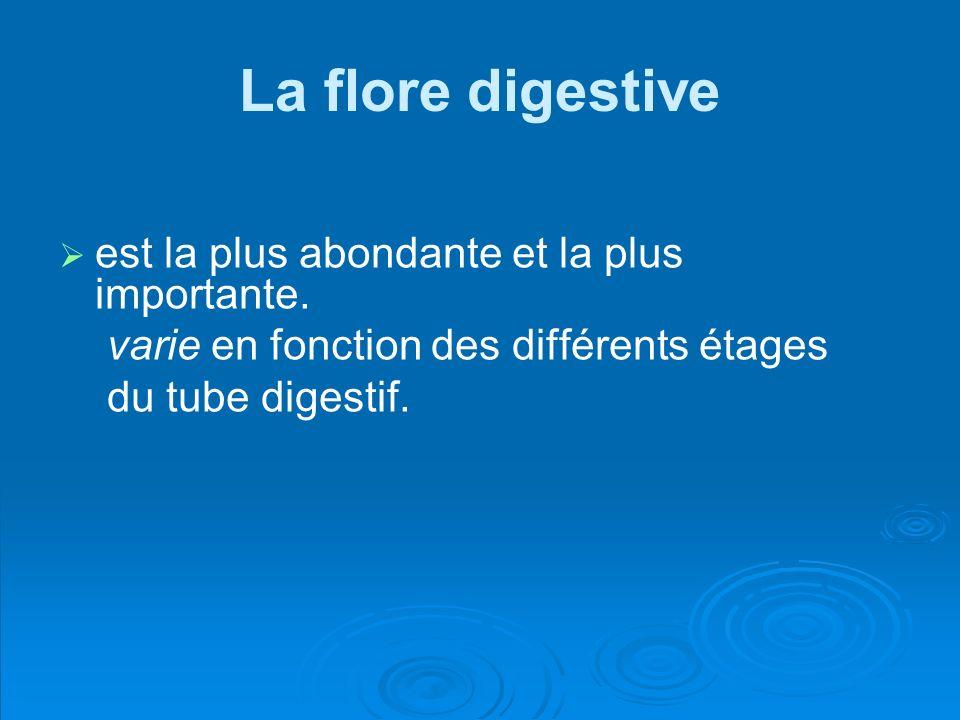La flore digestive est la plus abondante et la plus importante.