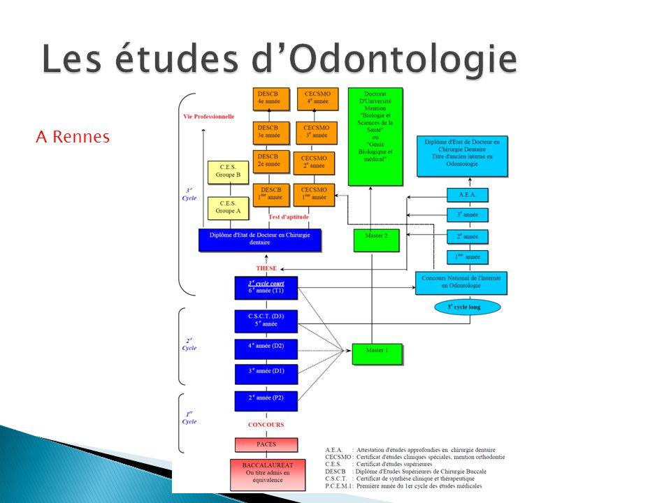 Les études d'Odontologie