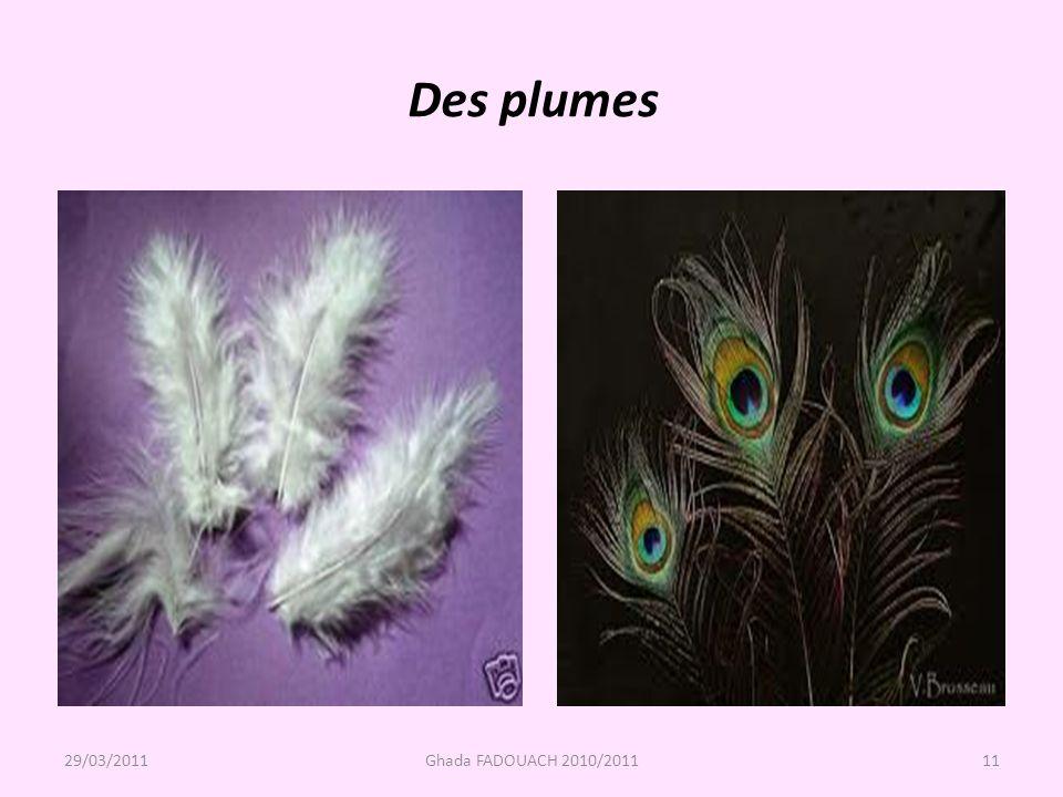 Des plumes 29/03/2011 Ghada FADOUACH 2010/2011