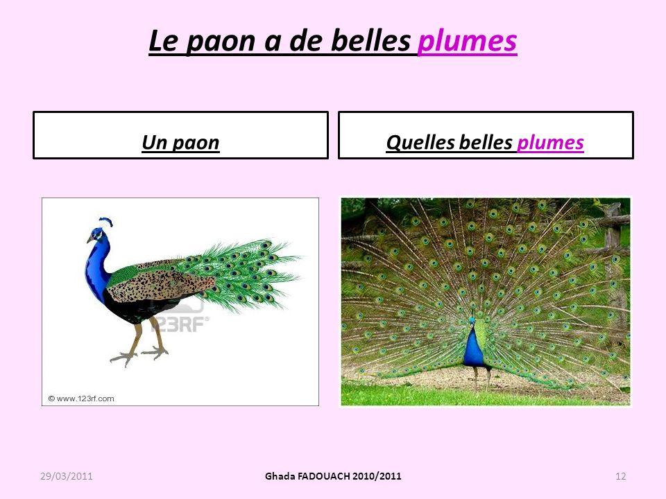 Le paon a de belles plumes