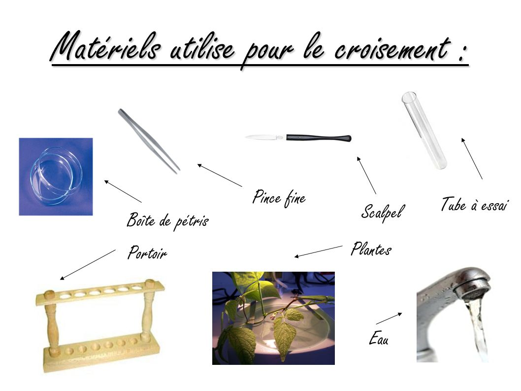 Matériels utilise pour le croisement :