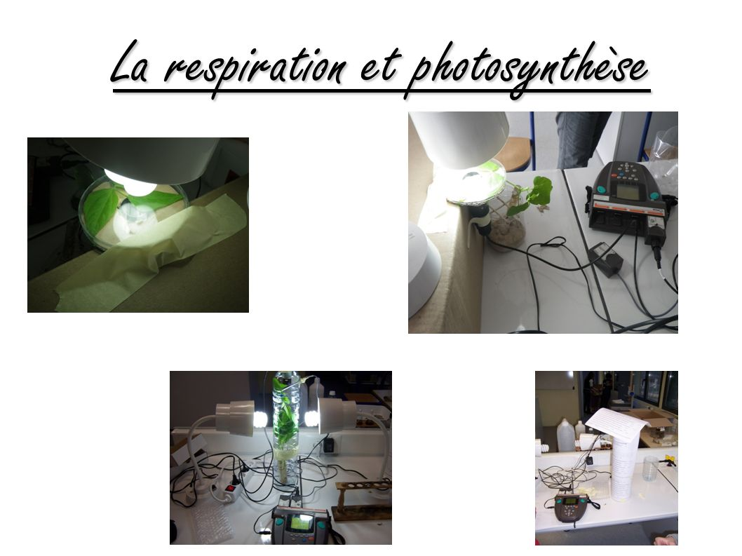 La respiration et photosynthèse