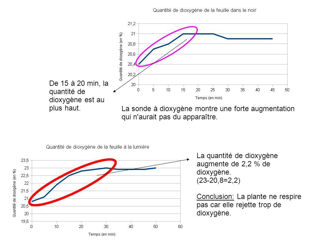 De 15 à 20 min, la quantité de dioxygène est au plus haut.