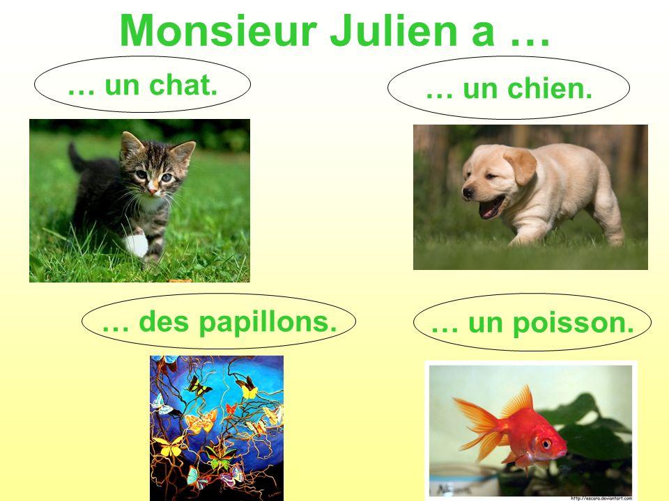 Monsieur Julien a … … un chat. … un chien. … des papillons.