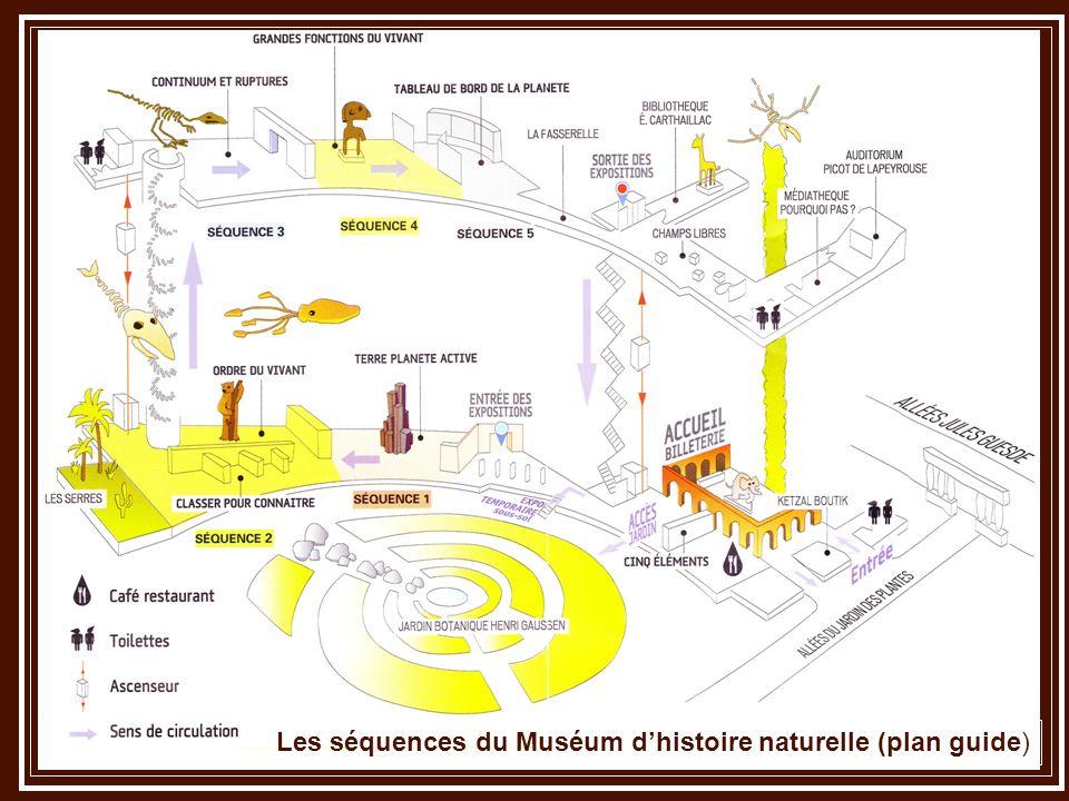 Les séquences du Muséum d'histoire naturelle (plan guide)