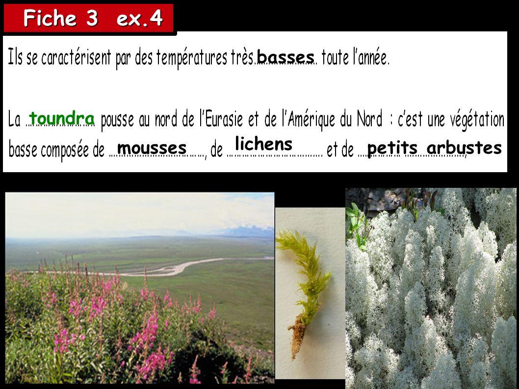Fiche 3 ex.4 basses toundra lichens mousses petits arbustes