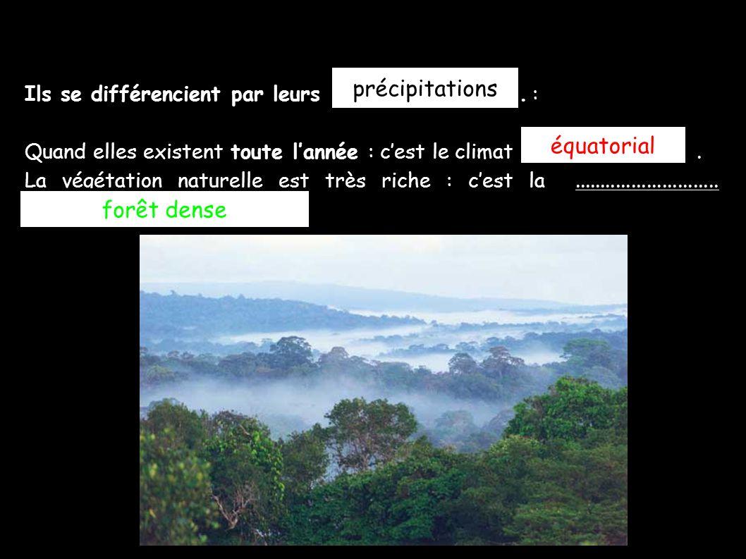 précipitations équatorial forêt dense